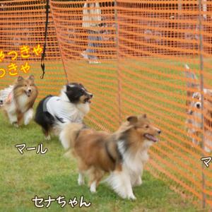 横浜シンボルタワー シェルティエリア最終章 結論:やっぱりシェルティはかわいいのだ♡