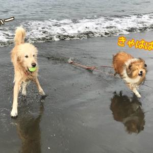 つむたんに海でボール遊びをするお友達が新しくできたんだ~♪