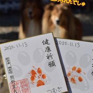 軽井沢でワンコと肉球スタンプで健康祈願♡熊野皇大神社