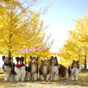 イチョウがいい調子!旅の〆は黄葉のイチョウ並木 加須はなさき公園 お友達とド、ド、ドリフの大爆笑♪