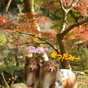 着物DE今年最後の紅葉 日本一遅い紅葉 熱海梅園 着物はホントありがたきもの♡