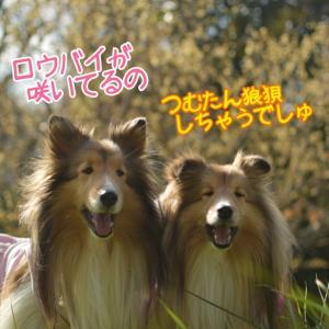 ビオトピア!ロウバイに梅に河津桜でウキウキの春んぽ♡