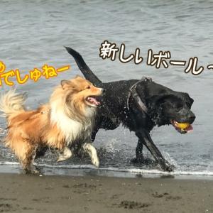 梅雨ですよ!雨季も楽しく海遊び♪