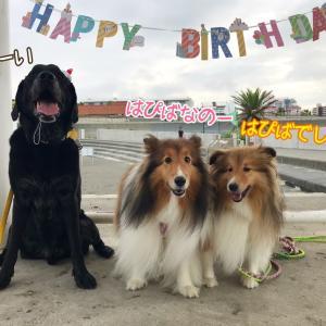 ブレちゃん11歳の誕生日♪みんなでビーチパーティー