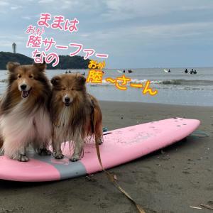 昨日も湘南わんこ波乗りクラブ!元気復活で波にも調子にも乗りすぎた