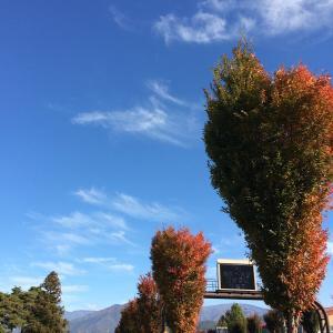 秋の匂いをさがしに