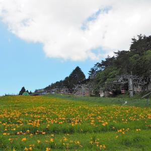ニッコウキスゲを見に六甲山上へ-1