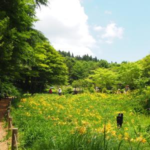 神戸・六甲山で高山植物-2