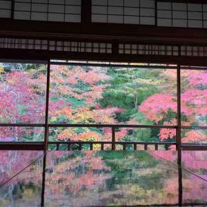一粒で二度おいしい京都