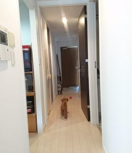 廊下でここちゃんとボール遊び♪
