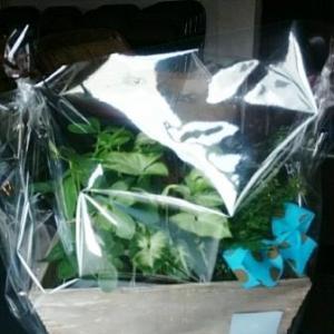 プチグリーン(観葉植物)セット