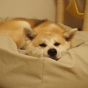 理想のベッド