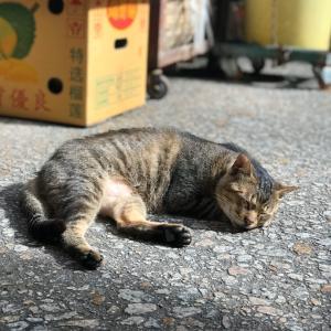 街市の猫 今日の練習は辛かった