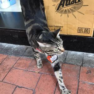 今日の猫ちゃん 街市の様子と今日の夕ご飯