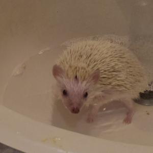 初めてのお風呂