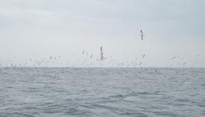 マハタのおよがせ釣りに初挑戦@第二美吉丸 洲崎