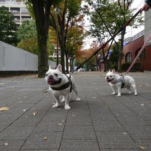 秋のお散歩写真