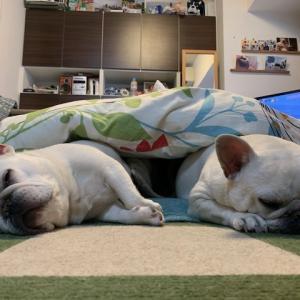 2犬の寝相