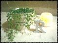 コナン缶コースター付きフレーバーウォーター24個コミ1081円!