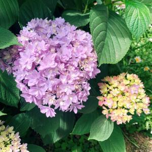 実家のお庭がパラダイスになっていた(❁´ω`❁)一面にお花なんか、嬉しくなった♡...