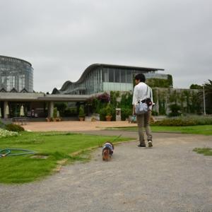 涼しかった日に稲毛海浜公園へ♪