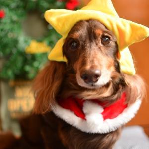 Laniのクリスマス☆