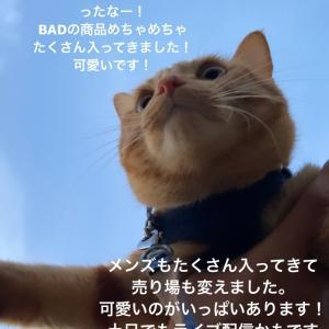 BADオーダー会&福袋予約スタート!