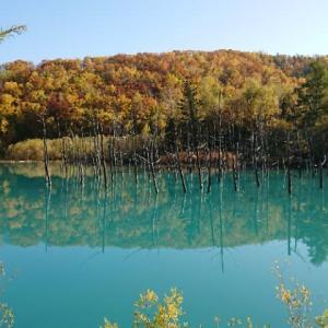 青い池から美瑛の丘 紅葉の北海道へ(5)