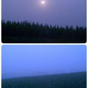 北海道旅行2003(4)