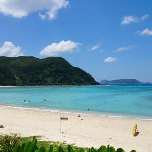 ウミガメと泳いだ渡嘉敷島
