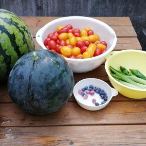 夏野菜【西瓜とキュウリ収穫終わり】