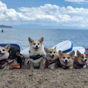【犬連れキャンプ】コーギーを乗せてSUPにチャレンジ★