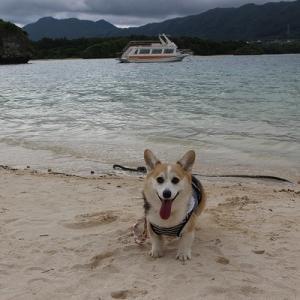 コーギーと巡る石垣島観光