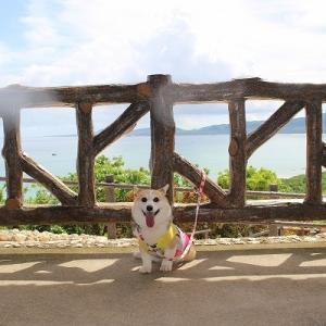 コーギーと巡る石垣島観光【玉取崎展望台】