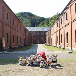 2020年秋のコギ合宿!【舞鶴赤れんがパーク】