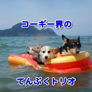 日本海のわんこ専用ビーチにてんぷくトリオ現るw