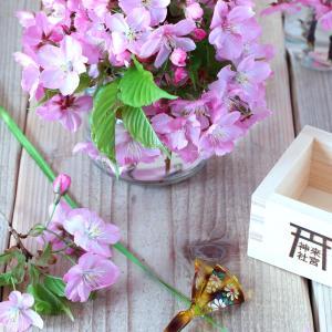Garden河津桜満開を過ぎました