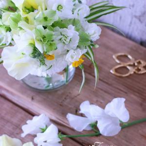 早春の花を飾る