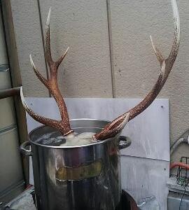 新年初鹿猟!