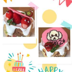 お初のワンちゃんへのお祝いケーキ( ◠‿◠ )