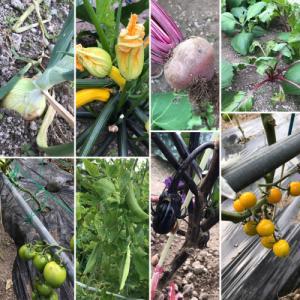 程島農園のお野菜たくさん(*☻-☻*)