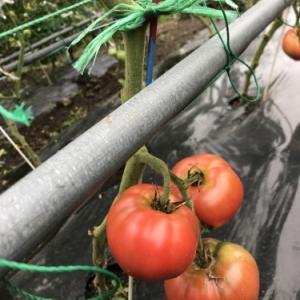 程島農園のお野菜たち(*^_^*)