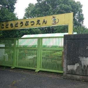 狭山市 8月の智光山こども動物園。