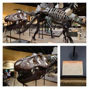 宇都宮市 栃木県立博物館 2 ティラノサウルスの化石など。