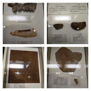 宇都宮市 栃木県立博物館 5 企画展と栃木県中央公園。