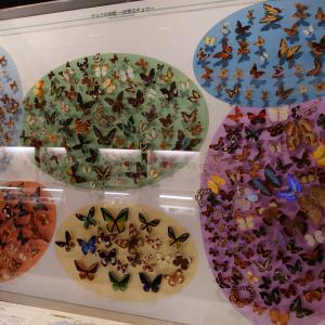 宇都宮市 栃木県立博物館 4 昆虫標本と化石など。