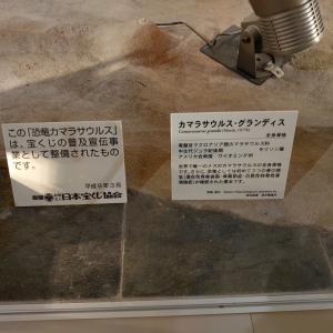 富岡市 群馬県立自然史博物館に再訪 2 化石など。