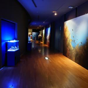 富岡市 群馬県立自然史博物館に再訪 3 企画展海と森。