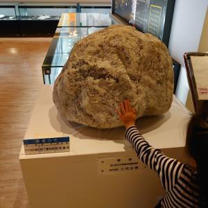 いわき市 石炭・化石館 ほるる 2 いわき市の化石など。