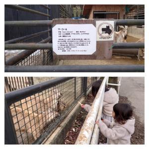 宇都宮市 宇都宮動物園に再訪 2 動物達との触れ合いなど。